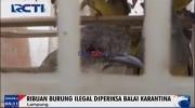 BKSDA Lampung Gagalkan Penyelundupan Satwa