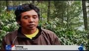 Aroma Kopi Indonesia Tak Seharum Nasib Petaninya